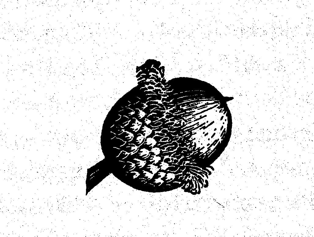 The Fall of Acorns