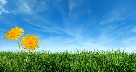 Our Lawn, Our Eden