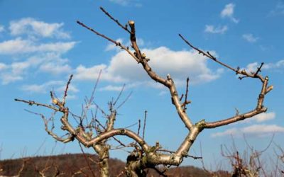 A Time in Life for Pruning, Now